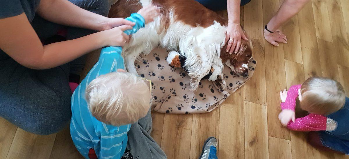 Czworonożni przyjaciele w domu dziecka